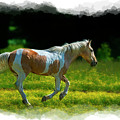 Palomino Galloping In Field by Dan Friend