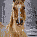 Palomino In The Snow by Tina Meador