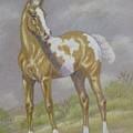 Palomino Paint Foal by Dorothy Coatsworth