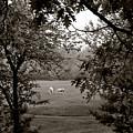 Palominos Framed In Oak by Wayne King