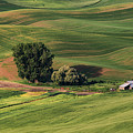 Palouse Farm 1 by Jerry Fornarotto