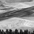 Palouse Field 2740 by Bob Neiman
