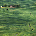 Palouse Green Fields by Jerry Fornarotto