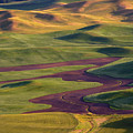 Palouse Hills by Mike  Dawson