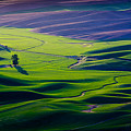 Palouse - Later Afternoon by Rikk Flohr