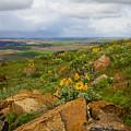 Palouse Sunflowers by Idaho Scenic Images Linda Lantzy