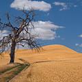 Palouse Wheat Field by Emil Davidzuk