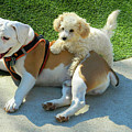 Pals - Linus And Buddy by Emmy Vickers