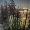 Pampas Grass Sunset by Paul Kukuk