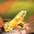 Panamenian Golden Frog by Ceci Watson