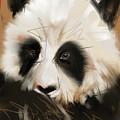 Panda Bear by Go Van Kampen