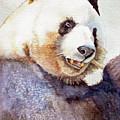 Panda Eating by Bonnie Rinier