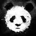 Panda by Mark Rogan