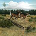 Panhandle Deer by Timothy Tron