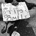 Panhandling Pooch. by Spirit Vision Photography