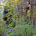 Panorama Of Gorman Falls At Colorado Bend State Park - Lampasas Texas Hill Country by Silvio Ligutti