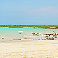 Panorama Of The El Garrapatero Beach On Santa Cruz Island In Gal by Marek Poplawski