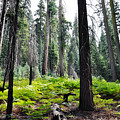 Panoramic Forest by Kyle Hanson