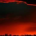 Panoramic Horse Sunset by Mark Duffy