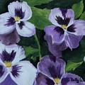 Pansies by Betty-Anne McDonald