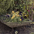 Pansies In A Wheelbarrow by Elaine Teague