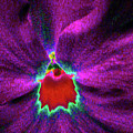 Pansy 03 - Photopower - Thoughts Of You by Pamela Critchlow
