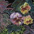 Pansy by Arlene  Wright-Correll