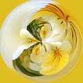 Pansy Ball by James Steele