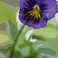 Pansy by David Bearden