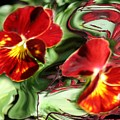 Pansy Hybrid by Jacquie King