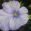 Pansy by Michael Schedgick