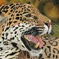 Panthera by Lori Hanks