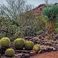 Papago And Barrels by Jon Burch Photography