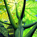 Papaya Tree by Kevin Smith