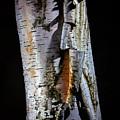 Paper Birch by Robert Storost