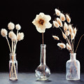 Paper Flowers by Sue Collura