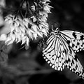 Paper Kite In Black And White by Chrystal Mimbs