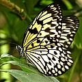 Paper Kite by J M Farris Photography