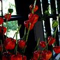 Paper Lantern Plant by April Patterson