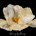 Paper Peony Loving By Giving by Diane E Berry