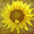 Paper Sunshine by Melinda Ledsome