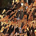 Papery Beech Leaves by Debbie Oppermann