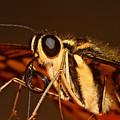 Papilio Demoleus by Joerg Lingnau
