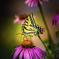 Papilio by Jeffrey Jensen