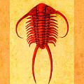 Paraceraurus Fossil Trilobite by Melissa A Benson
