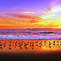 Paradise Found, Huntington Beach, California, Catalina Island by Don Schimmel