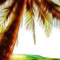 Paradise Palm by Athena Mckinzie