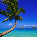 Paradise Palm Over Lanikai by Tomas del Amo - Printscapes