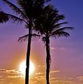 Paradise Palms by Lisa Renee Ludlum