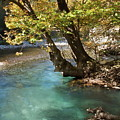 Paradise River by Loukianos Petrovas